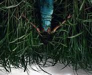 """""""In the Tall Grass"""" Movie Review"""