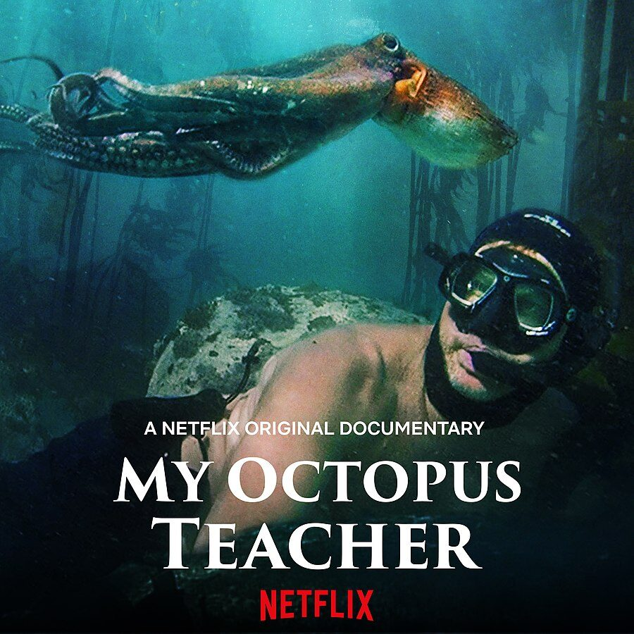 The+Documentary+in+the+Spotlight%3A+A+Review+of+%22My+Octopus+Teacher%22